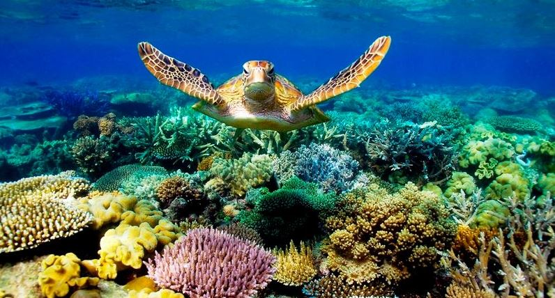 discover the best of the Great Barrier Reef with Cairns dive tours